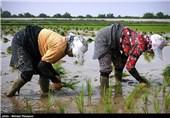 «معجزه آبخیزداری»|نجات روستاهای کشور از مرگ خاموش با آبخیزداری