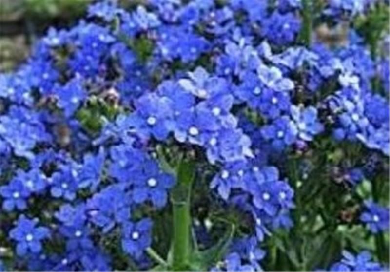 گیاهان دارویی، ظرفیتی نهفته برای توسعه استان لرستان است