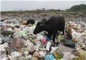 لایحه احداث کارخانه بازیافت زباله در شورای شهر زنجان رای نیاورد