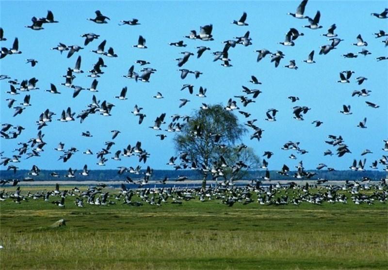 Image Result For Hibernation And Migration