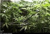 فروش ماریجوانا در اتریش
