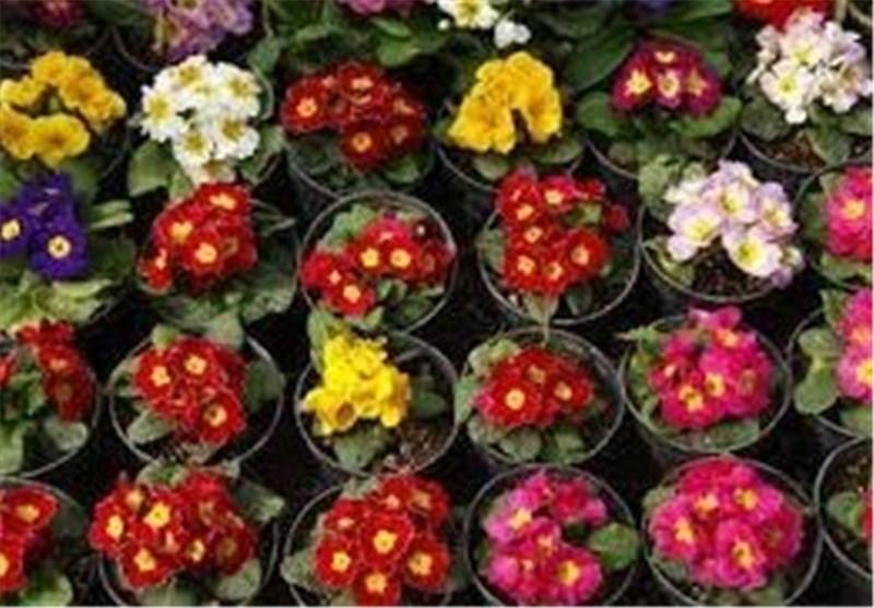 گیاهان بومی کشور به دنیا معرفی شود / ارائه تسهیلات به تولیدکنندگان گلهای زینتی