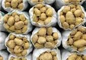 سالیانه 30 هزار تن سیبزمینی در لارستان تولید میشود// انتشار//