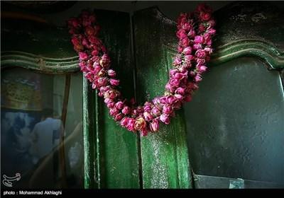 عملیة انتاج ماء الورد بمدینة قمصر فی کاشان