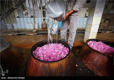 Rose Water Distillation in Iranian City of Kashan