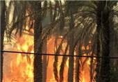 بوشهر|2.7 میلیارد ریال به نخیلات آبپخش دشتستان خسارت وارد شد