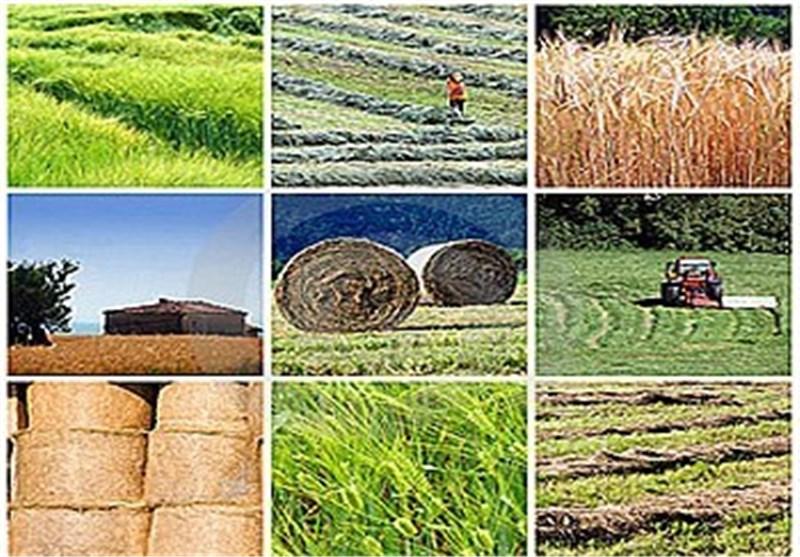 126 هزار تن محصول تضمینی از کشاورزان همدان خریداری شد