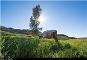 طبیعت بهاری خوزستان