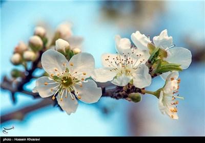 Iran's Beauties in Photos: Spring in Shiraz