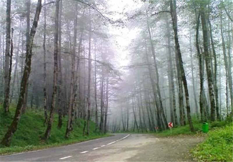 Dalkhani Forests Known as Paradise Hall in North of Iran
