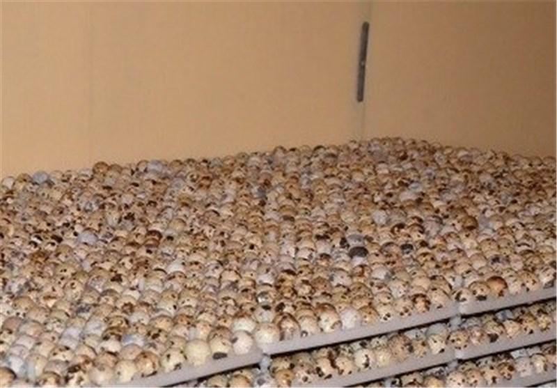 درخواست مجوز پرورش بلدرچین اصفهان پروژه مشترک تولید و پرورش شترمرغ ایران و کانادا.