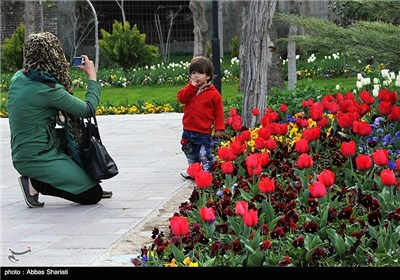 Festival of Tulips in Alborz Province