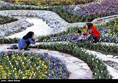 Photos: Festival of Tulips in Iran's Alborz Province