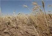 خشکسالی 143 میلیارد تومان به بخش کشاورزی چهارمحال و بختیاری خسارت وارد کرد