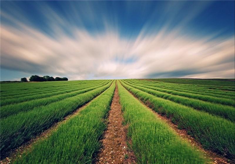 اطلاعیه هواشناسی کشاورزی برای 4 روز آینده/ مبارزه با سن و زنگ زرد گندم و پسیل پسته
