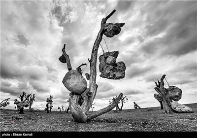 Stone Garden: Iran's Most Amazing Garden