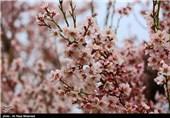 طبیعت بهاری - چهارمحال و بختیاری