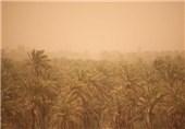 کاشت گیاهان مثمر در خوزستان سبب کاهش گرد و خاک میشود