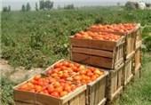 340 هزار تن محصولات کشاورزی در شهرستان رامیان تولید شد