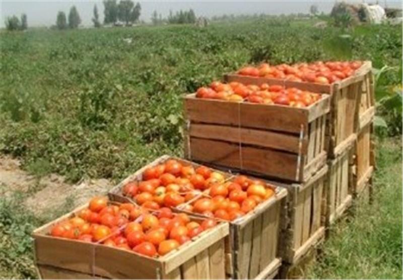 میزان صادرات محصولات کشاورزی استان سمنان به بیش از 22 میلیون دلار رسید
