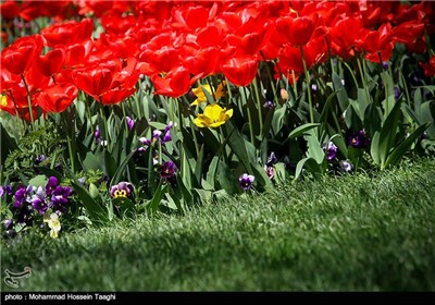 Spring Flower Festival Held in Mashhad