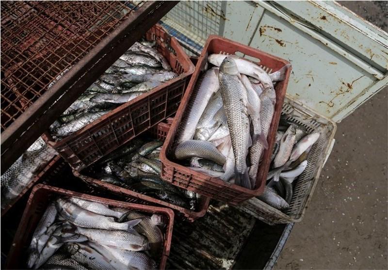صید ماهی دریای خزر گلستان