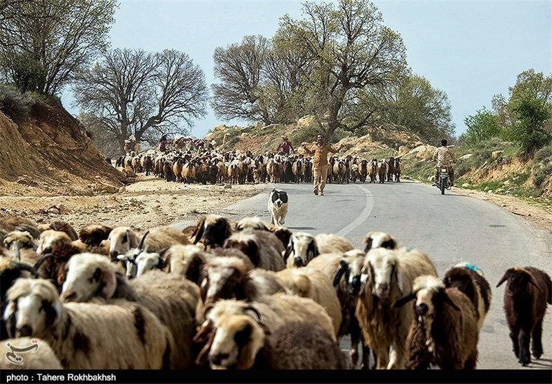 عبور عشایر کوچرو از شهرستان پلدختر متوقف شود