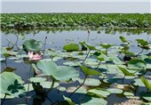 Anzali Lagoon: A Coastal Liman in the Caspian Sea