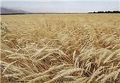 اختصاص بیش از یک هزار و 100 میلیارد ریال برای اجرای پروژههای کشاورزی استان اصفهان