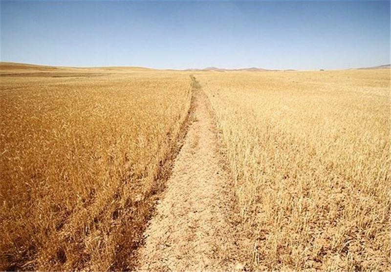 دفاتر صندوق توسعه کشاورزی در 12 شهرستان مازندران راه اندازی میشود