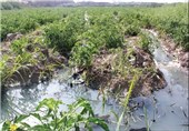 """""""استفاده از فاضلاب برای آبیاری مزارع"""" علت مسمومیت 30 نفر از اهالی روستای اوجابن گرگان"""