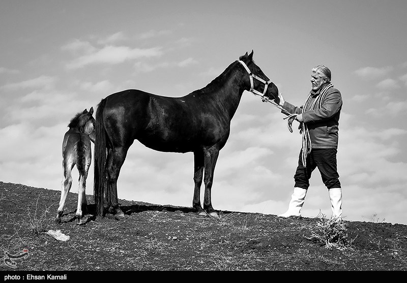 نخستین مرکز ملی تشخیص بیماریهای اسب کشور در گلستان احداث میشود