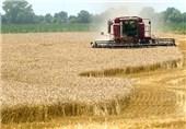 21 هزار تن گندم از مزارع شهرستان پلدختر برداشت شد