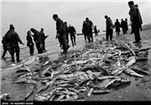 صید ماهیان استخوانی از دریای خزر آغاز شد