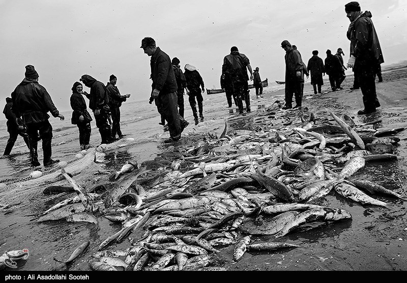 پایان فصل صید ماهی در گیلان