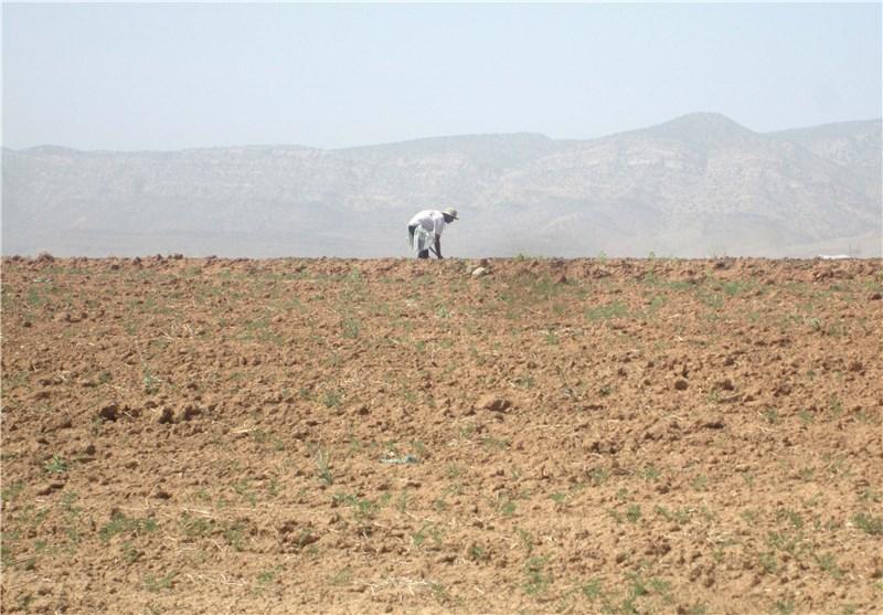 خشکسالی کشاورزی/ کوهدشت6