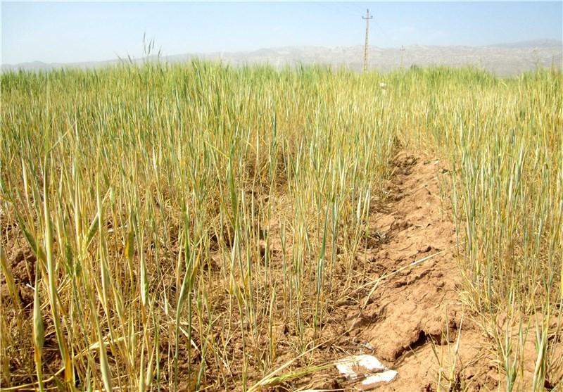 صنایع تبدیلی در مجاورت روستاهای قم ایجاد شود