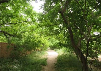 باغ قصرالدشت شیراز
