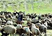 کوچ بهاره عشایر استان اردبیل آغاز شد