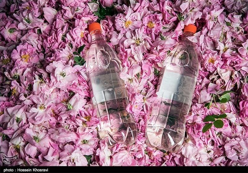 کارآفرینی با عطر گلهای محمدی؛ موانع صادرات عرقیات گیاهی برطرف شود