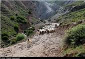 شروع فصل دوشیدن دام در روستای چپانلوشیروان (خراسان شمالی)