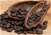 کود بیولوژیک ایرانی مزارع کاکائو در آفریقا را نجات داد