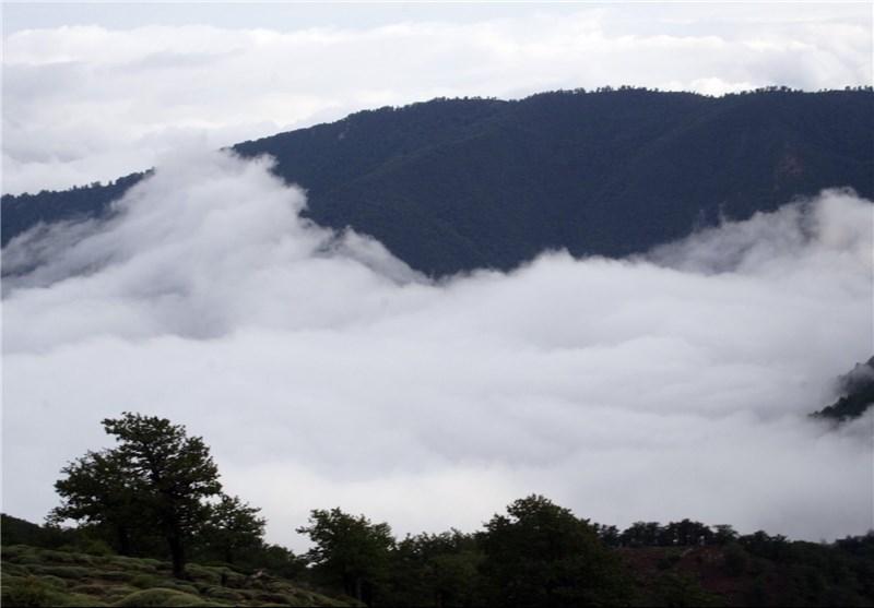 جنگل ابر به منطقه حفاظتشده تبدیل شد