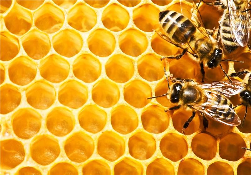 عسل کندو زنبور