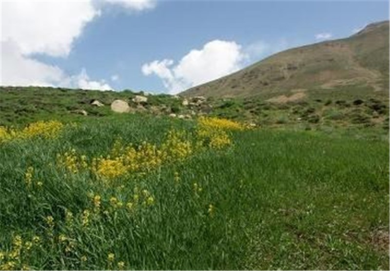 طرح کاداستر در اراضی منابع طبیعی شهرستان جم اجرا شد- اخبار استانها - اخبار تسنیم - Tasnim