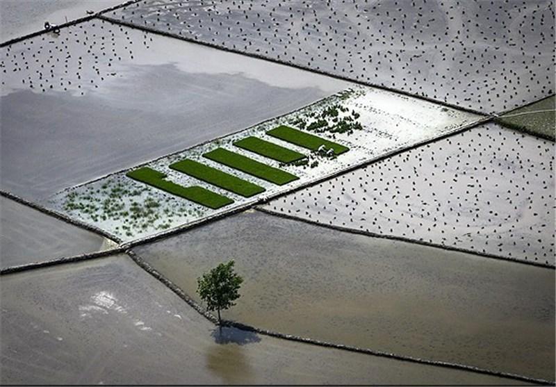 مزارع کشاورزی گیلان فصل زراعی امسال با مشکل آبیاری مواجه نبودند