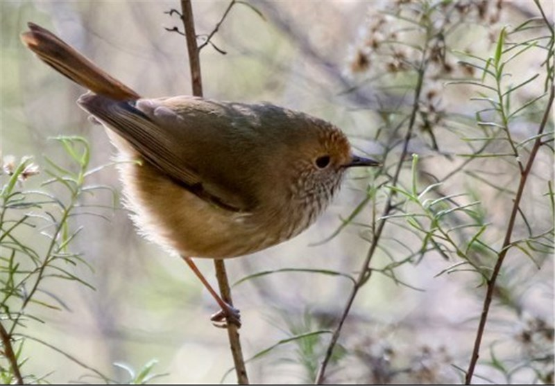 Birds Raise False Alarm to Scare Off Predators
