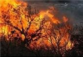 حریق به جان جنگلهای کبیرکوه ایلام افتاد/درختان بلوط همچنان در آتش میسوزند