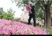 جشنواره گل و گلاب