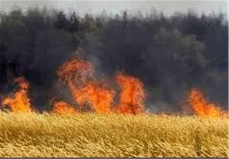War Heavily Damages Syria's Agriculture: FAO